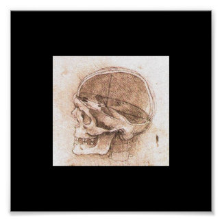 Vista de un cráneo de Leonardo da Vinci circa 1489 Póster