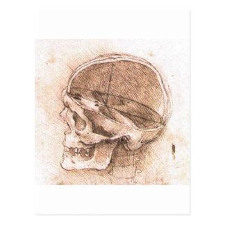 Vista de un cráneo de Leonardo da Vinci circa 1489 Tarjetas Postales
