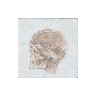 Vista de un cráneo Leonardo da Vinci Imán De Piedra