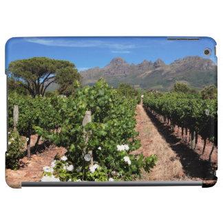 Vista de viñedos. Stellenbosch