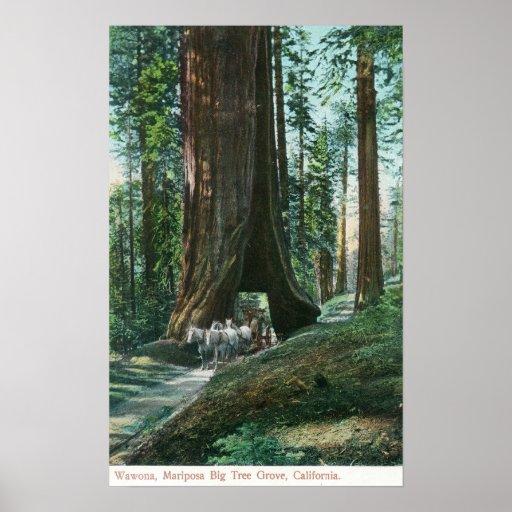 Vista del carro del caballo debajo del árbol de Wa Poster