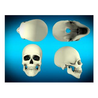 Vista del cráneo humano de diversos ángulos postal