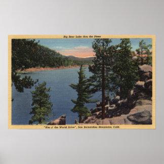 Vista del lago a través de los pinos posters