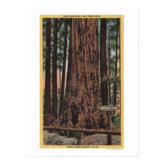 """Vista del """"triturador del cuello"""" en el parque tarjeta postal"""
