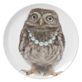 Vista delantera de un pequeño búho joven plato de comida