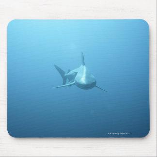 Vista delantera de un tiburón de tigre alfombrilla de ratón