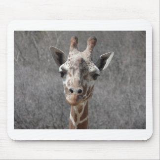 vista delantera principal de la jirafa alfombrillas de ratón