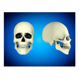 Vista delantera y vista lateral del cráneo humano tarjetas postales