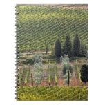 Vista elevada del viñedo y de olivos libreta
