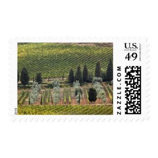 Vista elevada del viñedo y de olivos franqueo
