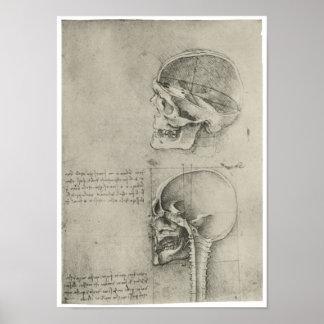 Vista interior del cráneo, Leonardo da Vinci Poster