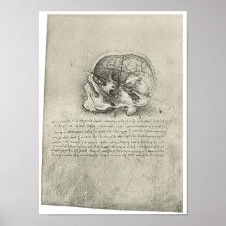Vista interior del cráneo, Leonardo da Vinci Póster
