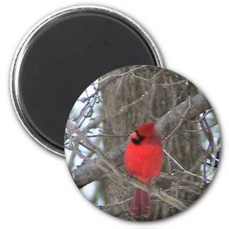 Vista lateral cardinal masculina imán redondo 5 cm
