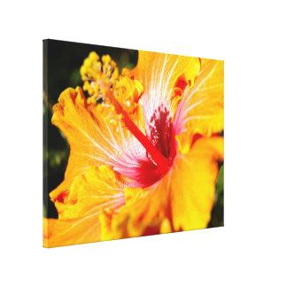 Vista lateral de la flor anaranjada del hibisco impresión en lienzo
