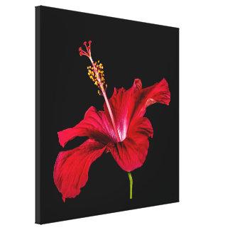 Vista lateral de la flor roja del hibisco impresión en lienzo