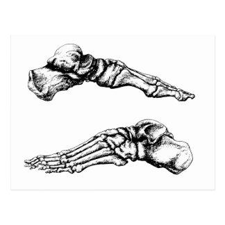 Vista lateral de los huesos de los pies tarjeta postal