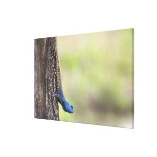 Vista lateral de un Agama del árbol (Acanthocerus Impresión En Lona
