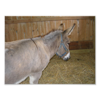 Vista lateral de un burro en una feria del condado fotografias