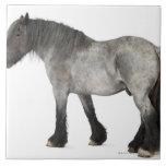 Vista lateral de un caballo belga, belga pesado azulejo cuadrado grande