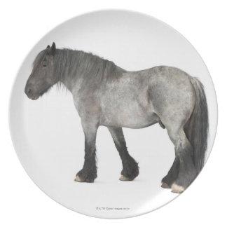 Vista lateral de un caballo belga, belga pesado platos