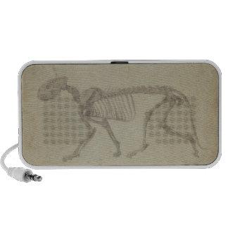 Vista lateral de un esqueleto del tigre, estudio a iPhone altavoz