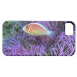 Vista lateral de un pescado de anémona rosado, iPhone 5 protector