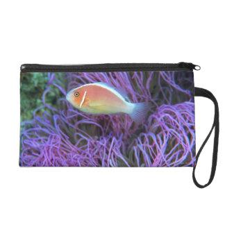 Vista lateral de un pescado de anémona rosado, Oki