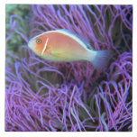 Vista lateral de un pescado de anémona rosado, Oki Azulejo Cerámica