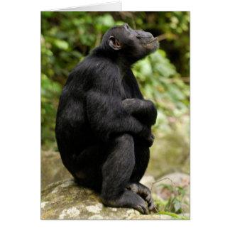Vista lateral del chimpancé (trogloditas de la tarjeta de felicitación