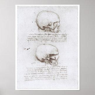 Vista lateral del cráneo, Leonardo da Vinci Poster