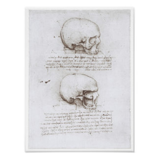 Vista lateral del cráneo, Leonardo da Vinci Póster