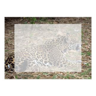 vista lateral del gruñido del gato del jaguar feli invitacion personal
