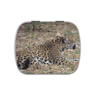 vista lateral del gruñido del gato del jaguar feli jarrones de caramelos
