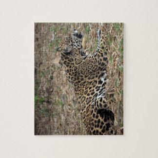 vista lateral del gruñido del gato del jaguar feli rompecabeza con fotos