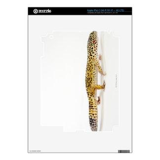Vista lateral del lagarto del gecko del leopardo iPad 3 pegatina skin
