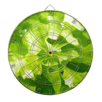 Vista macra de las hojas de la lechuga en una