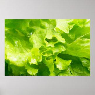 Vista macra de las hojas de la lechuga en una póster