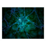 Vista microscópica de las células nerviosas póster