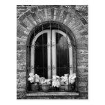Vista negra y blanca de la ventana y de macetas tarjeta postal