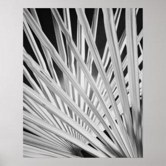 Vista negra y blanca de las frondas de la palmera poster