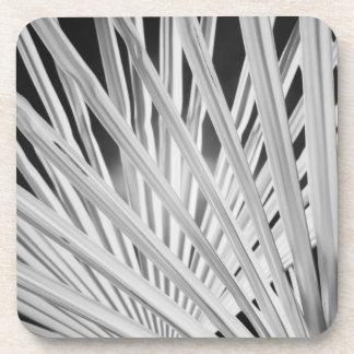 Vista negra y blanca de las frondas de la palmera posavasos de bebidas