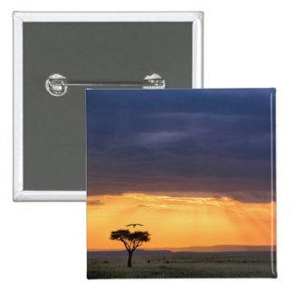 Vista panorámica del árbol del buitre y del acacia pin cuadrado