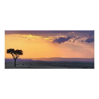 Vista panorámica del solo árbol del acacia en impresion fotografica