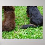 Vista posterior de dos perros del Dachshund