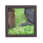 Vista posterior de dos perros del Dachshund Cajas De Regalo De Calidad