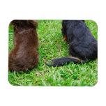 Vista posterior de dos perros del Dachshund Imán Flexible