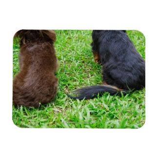 Vista posterior de dos perros del Dachshund Imán