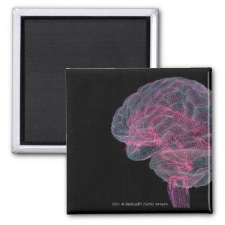Vista posterior del cerebro humano imán cuadrado