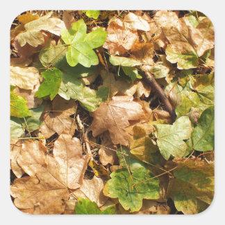 Vista superior del primer caido de las hojas de pegatina cuadrada