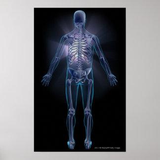 Vista trasera de un esqueleto humano poster